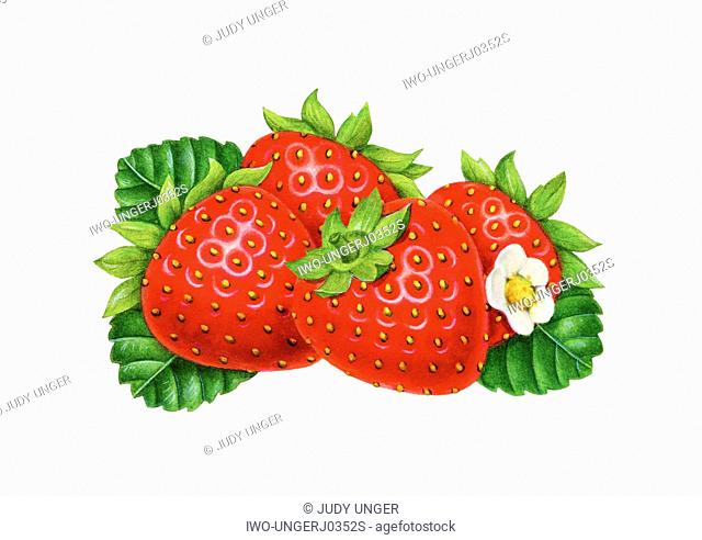 Small Bunch of Strawberries with Blossom