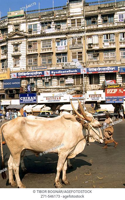 Street scene. Mumbai (Bombay). Maharashtra. India