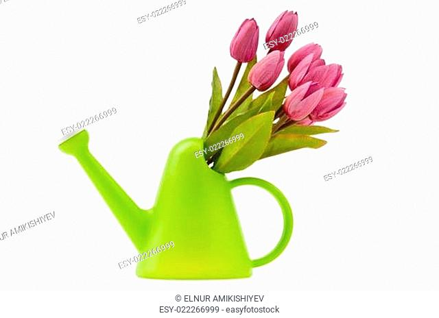 Gardening concept - Tulips and watering can