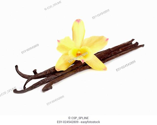 Vanilla pods with one yellow orchid