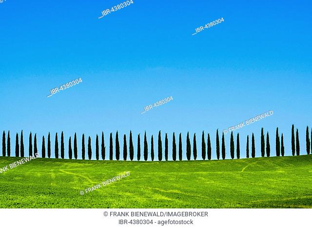 Typical green Tuscan landscape in Bagno Vignoni, Val d'Orcia, fields, cypresses and blue sky, San Quirico d'Orcia, Tuscan, Italy
