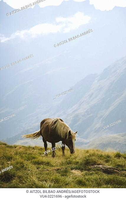 A horse from the Pyrenees. This shot was taked in the spanish part of the Pyrenees, in Formigal area
