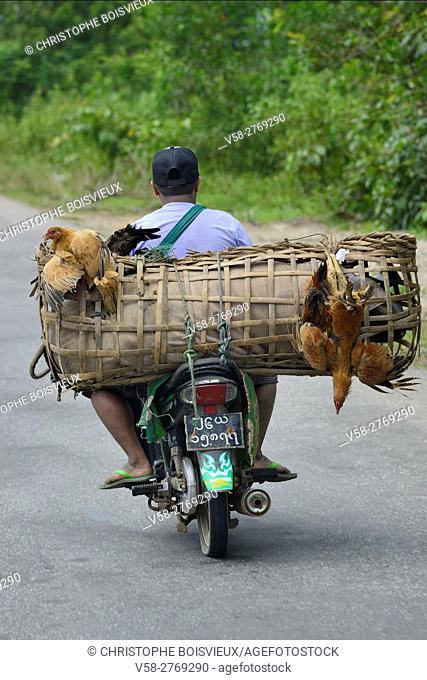 Myanmar, Kayin (Karen) State, On the road to Hpa-An's market