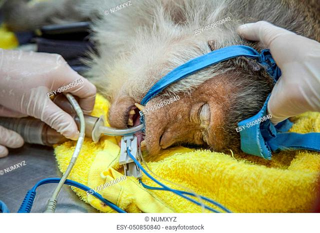 Veterinary Emergency Aid Monkey And Health check