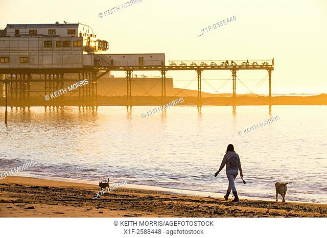 Aberystwyth Wales UK, Monday 02 November 2015. . A woman walking her dogs on the beach enjoying another day of cloudless skies and unbroken sunshine at the...