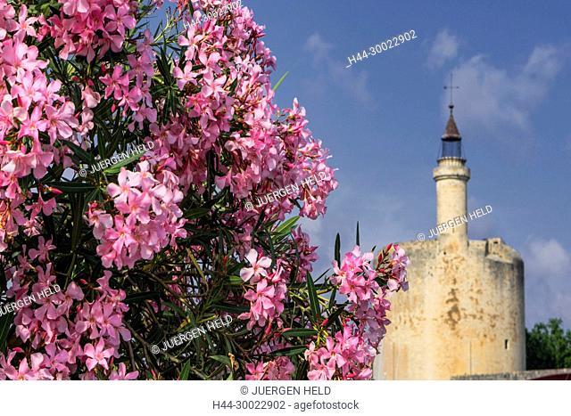 Flowers, Aigues-Mortes, Provence, Camargue, Languedoc-Roussillon, France Avignon, Bouche du Rhone, France, Provence, Avignon