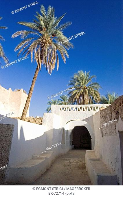 Palm garden at Ghadames, Ghadamis, Unesco world heritage site, Libya