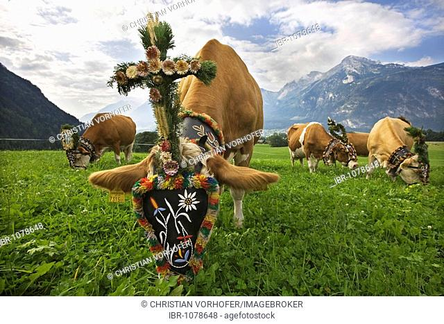 Decorated cow during Almabtrieb, ceremonial driving down of cattle from the mountain pastures into the valley in autumn, Reith im Alpbachtal, North Tyrol