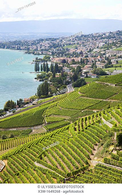 vineyards of lavaux and view of lausanne, lausanne, switzerland, europe