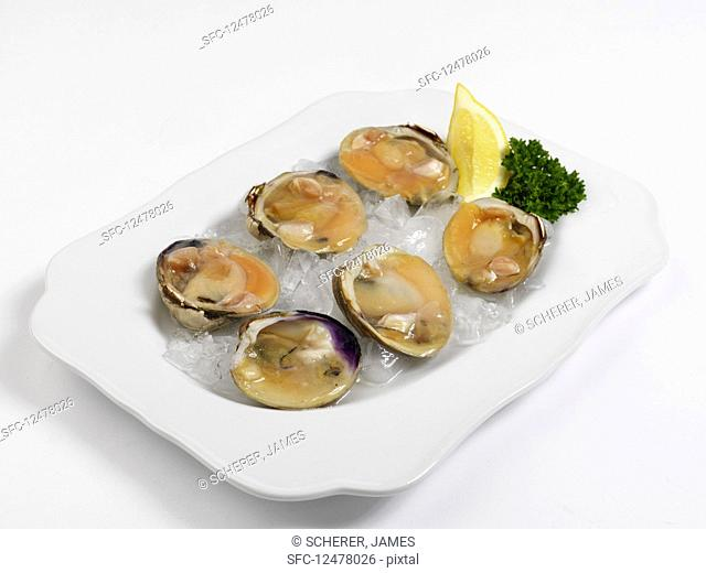 Fresh mussels on ice