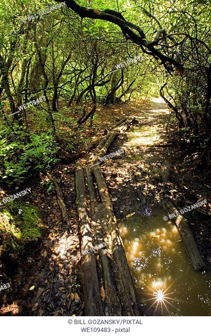 Log bridge on Butter Gap Trail - Pisgah National Forest, near Brevard, North Carolina
