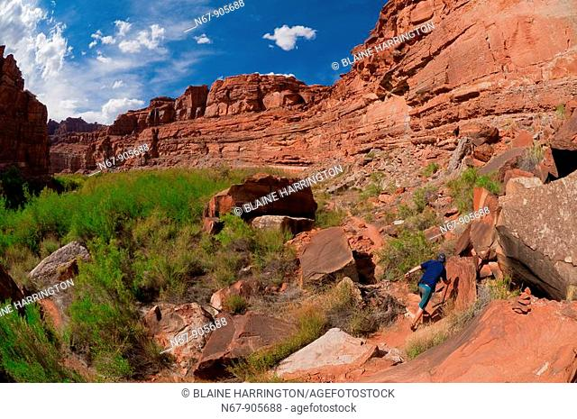 Hiking to Indian Creek waterfall on a Wilderness River Adventures motorized pontoon rafting trip down the Meander Canyon section of the Colorado River in...