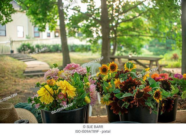 Buckets of farm fresh flowers for sale