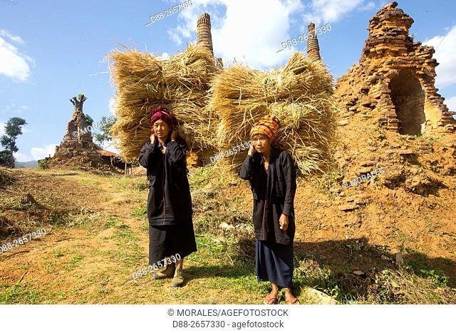 Myanmar, Shan State, Inle lake, farmer carries rice straw bales