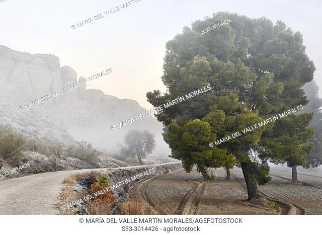 Fog at the Royal road to Madrid in La Marañosa. Madrid. Spain