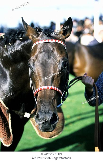 Racehorse looks at camera after end of race
