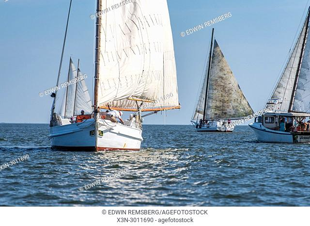 Traditional Skipjack boat cuts through Chesapeake Bay waters with other skipjack ships sailing in other direction in annual Deal Island Skipjack Race
