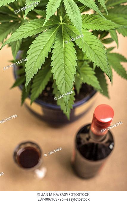 Cannabis plant and bottle of alcohol