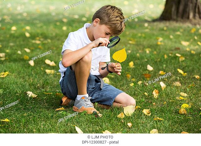 A young boy using a magnifying glass in a park; Edmonton, Alberta, Canada