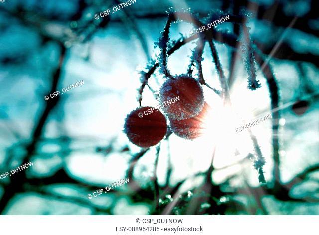 frozen berries with ice crystals