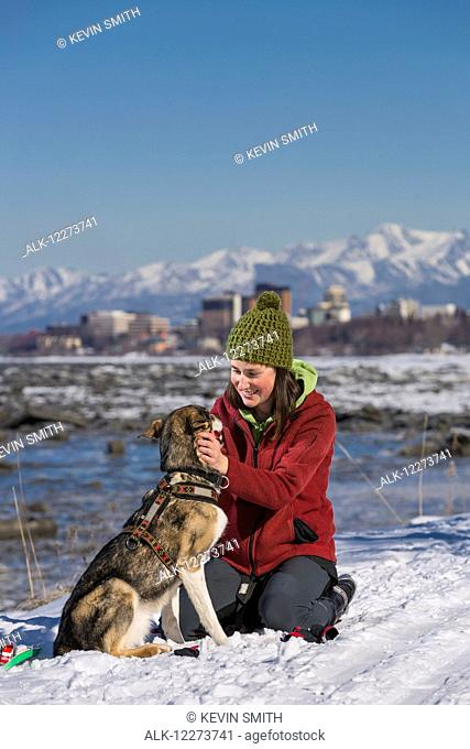 Young woman puts a harness on her Alaska Husky in order to skijor and skate ski on the Tony Knowles Coastal Trail, Anchorage, Southcentral Alaska