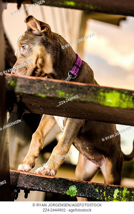 Afternoon photo of a cute mixed breed puppy dog walking up stairs in a garden backyard