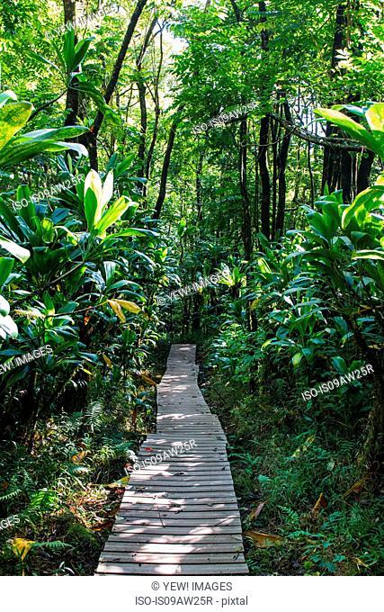 Boardwalk through rainforest, Haleakala, Hawaii, USA