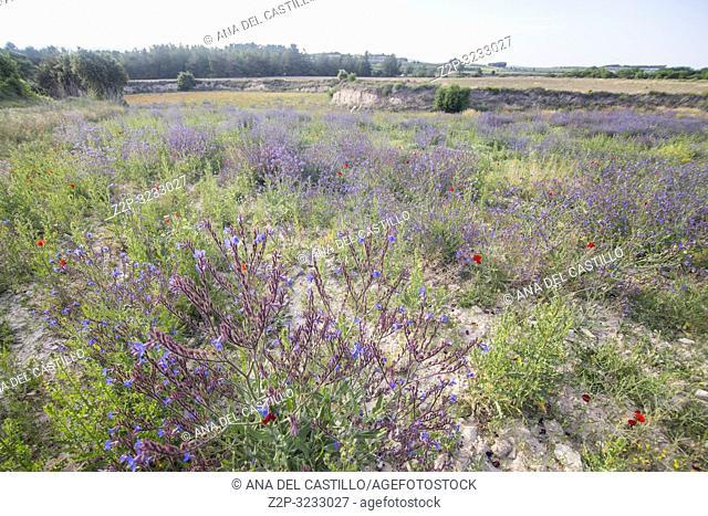 Spring fields in La Costera county Valencian community Spain