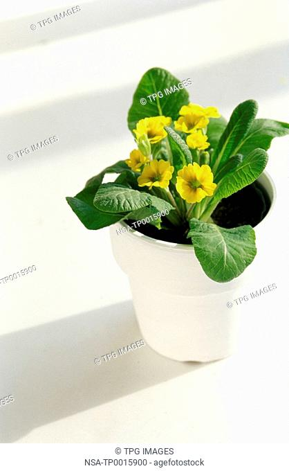 yellow flowers in a flowerpot