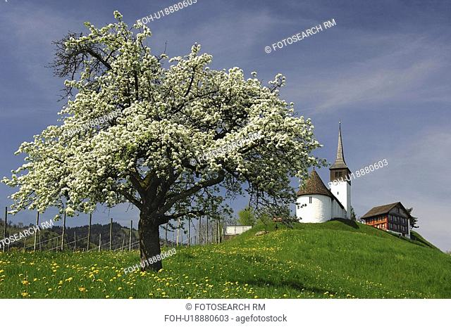 apple, st, switzerland, altendorf, johann, chapel