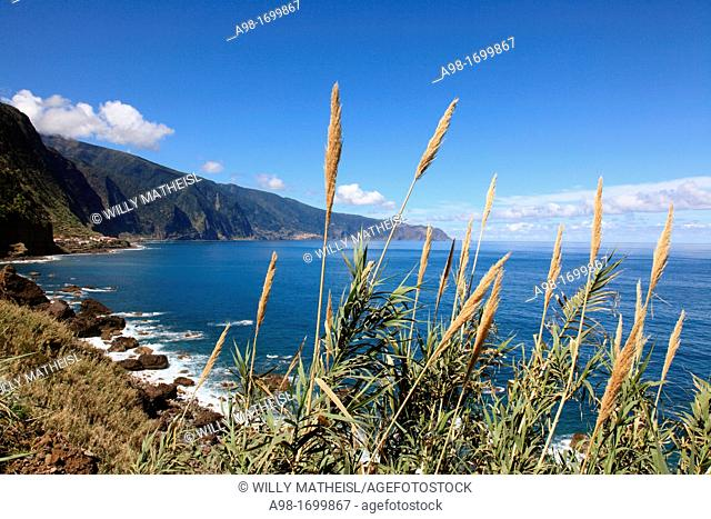 Reed at the North Shore of Madeira, Portugal, Europe
