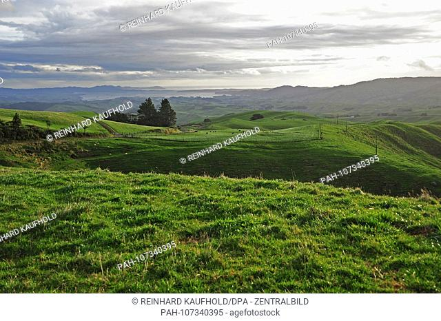 Farmland on the west coast of the north island of New Zealand, recorded in April 2018 | usage worldwide. - /Neuseeland