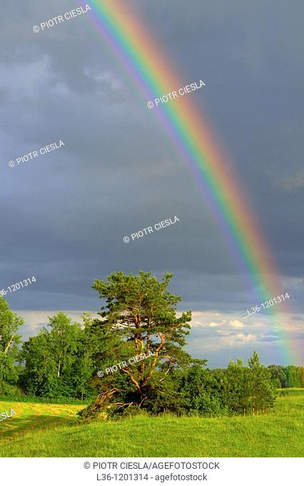 A rainbow after a strom. Podlasie region. Eastern Poland