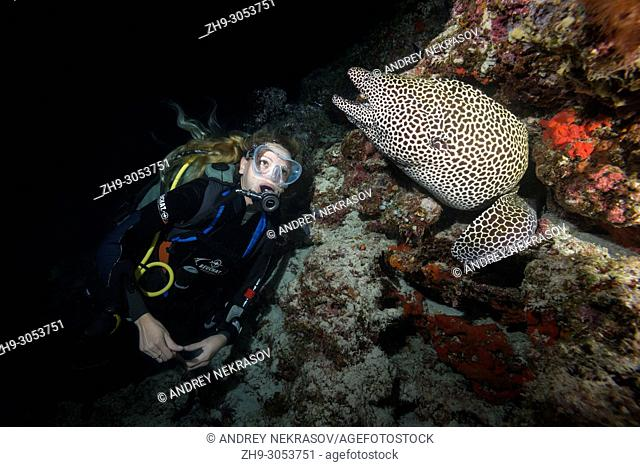 Female scuba diver looks at Honeycomb Moray (Gymnothorax favagineus) in the night