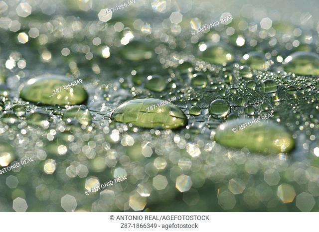Rain drops on a green canvas, Almansa, Albacete