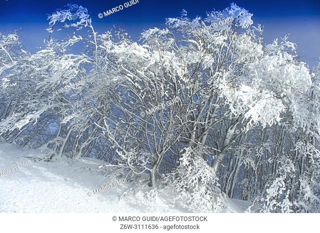 View of a snowy forest on a sunny day