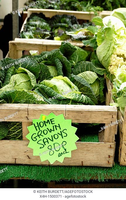 Home grown Savoy cabbages for sale at Aberystwyth Farmer's Market, Wales