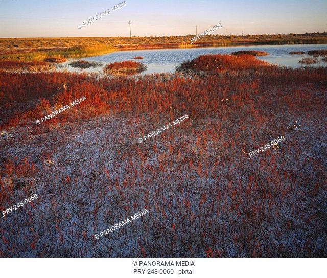 Landscape of salt land