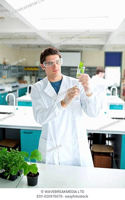 Student holding up beaker with seedling in it in the laboratory