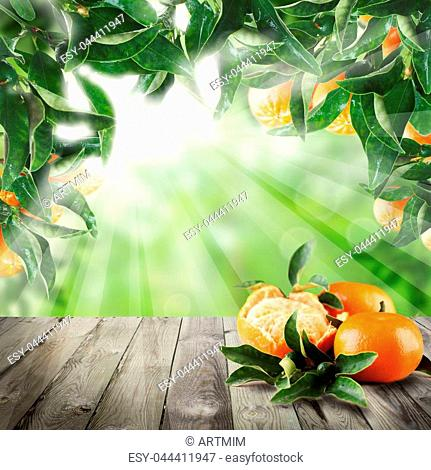 Mandarin fruits on abstract background with green tangerine leaves and empty wooden table with copy space