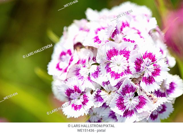Close up of colorful flowers in garden. Nature detail