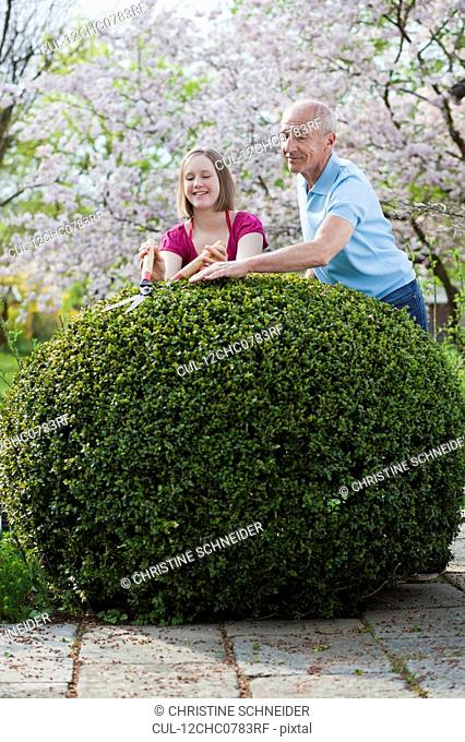 young girl and old man cutting hedge