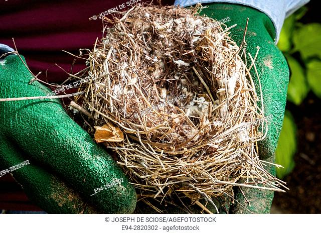 A bird's nest being held with gloves