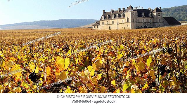 THE VINEYARD AND CASTLE OF CLOS DE VOUGEOT IN AUTUMN, COTES D'OR, BURGUNDY, FRANCE