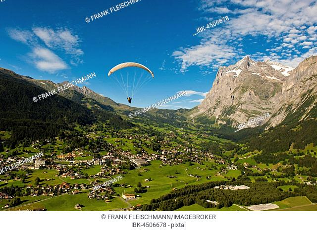 Paraglider above Grindelwald, mountains in front of Wetterhorn and First, Bernese Oberland, Canton of Bern, Switzerland