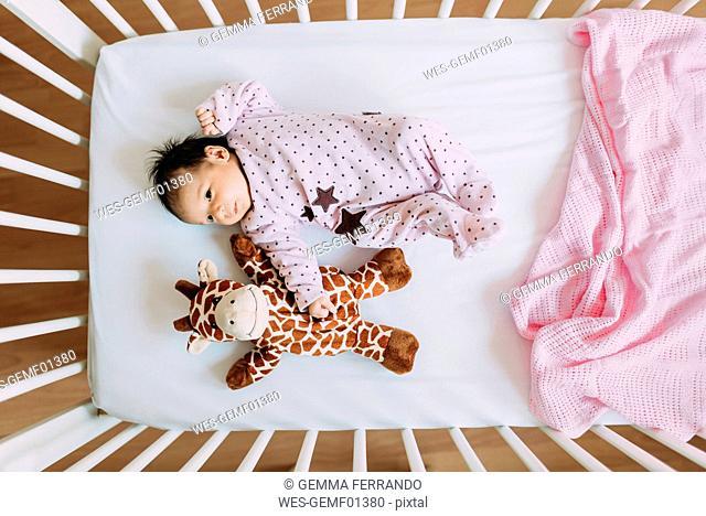 Newborn baby girl lying in crib with a plush giraffe
