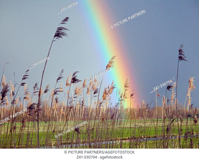 Rainbow. Holland