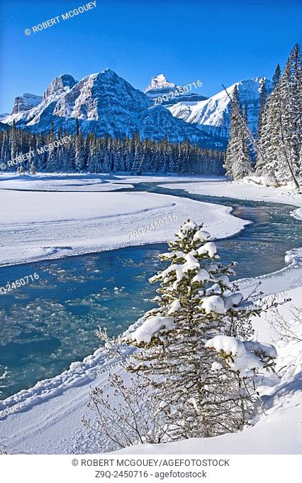 A vertical winter scenic along the freezing Athabasca river in Jasper National Park Alberta. Canada