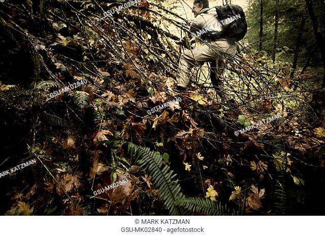 Hiker climbing over fallen tree, Redwood National Park, California, USA
