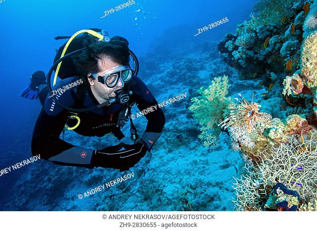 Male scuba diver looks at Red lionfish (Pterois volitans), Red sea, Dahab, Sinai Peninsula, Egypt